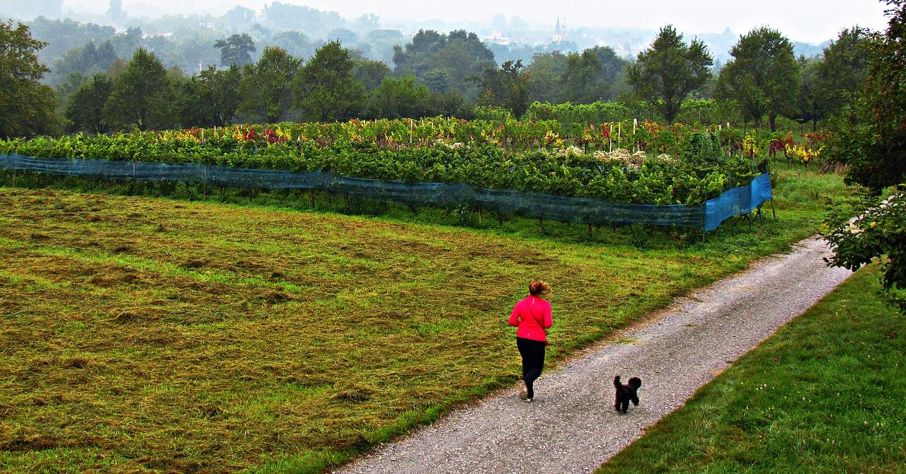 Bieganie z psem — pomysły na aktywny weekend z Twoim pupilem