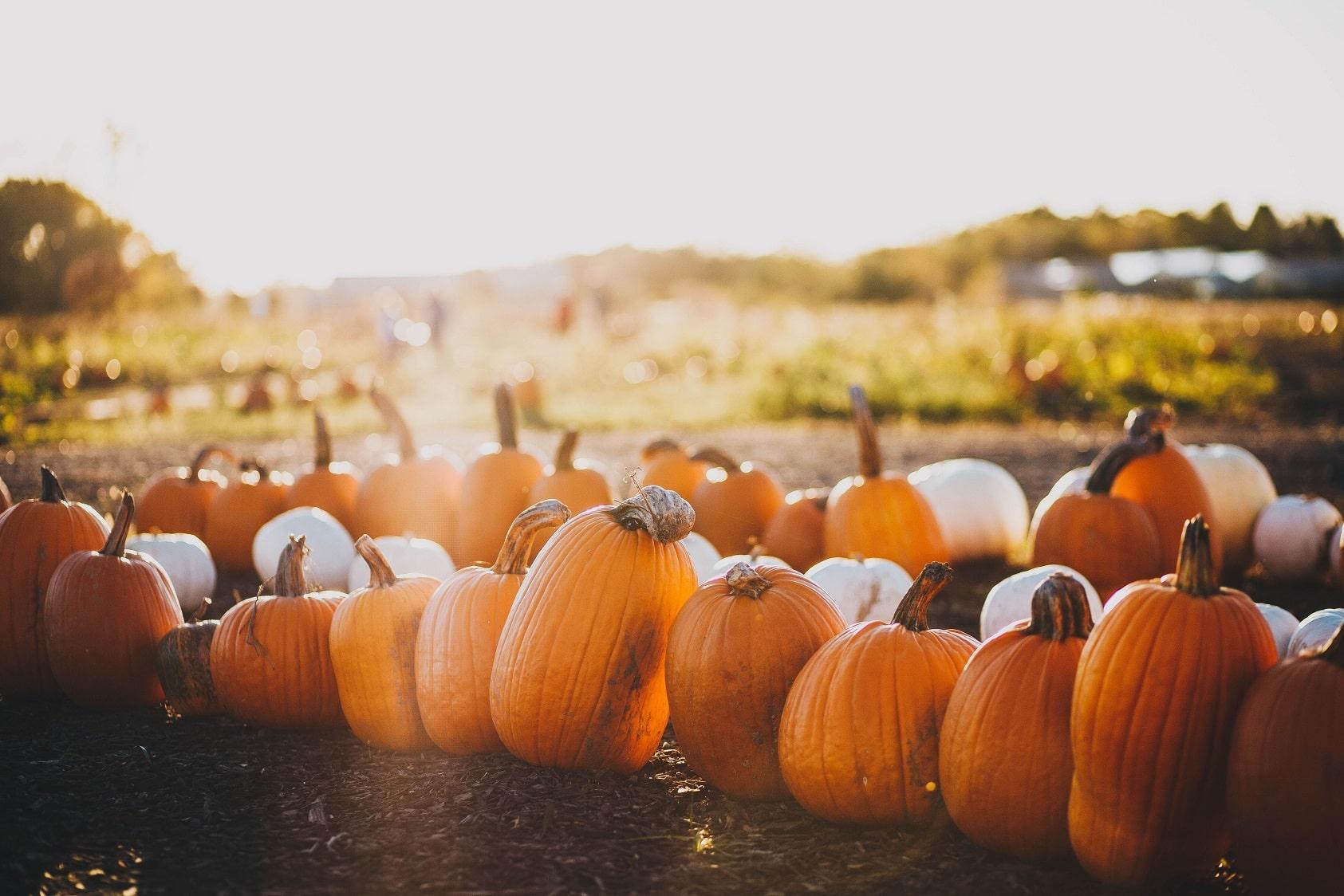 Jak wykorzystać zdrowe, sezonowe warzywa jesienią?